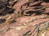 Folded ripples of the Grinnell Formation!