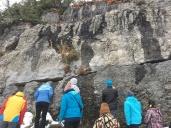 1.6 Ga stromatolites
